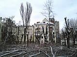 Кронирование спиливание деревьев, обрезка веток сада, фото 2