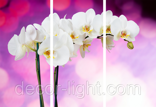 Картина модульная орхидея МD 034