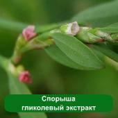 Спорыша гликолевый экстракт - укрепляет волосяные луковицы, 1 литр