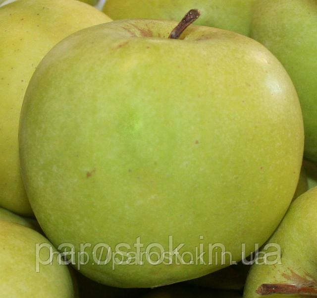 Яблоня Мутсу (Б7-35). Позднезимний сорт.