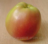 Яблоня Скифское Золото. (Б7-35) Зимний сорт.
