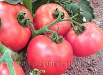 Выращивание томатов на открытом грунте