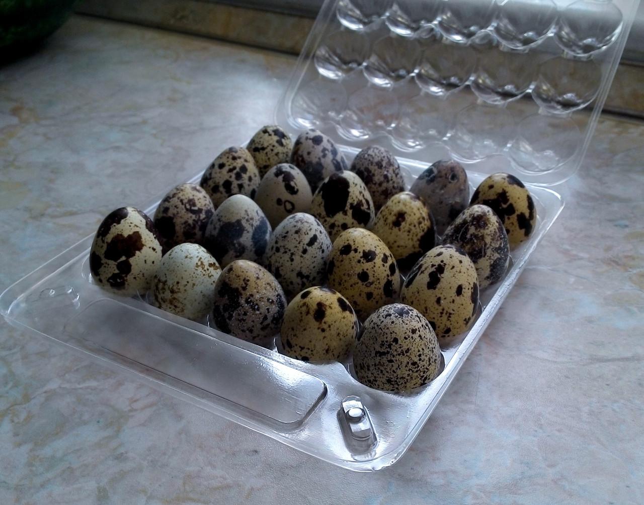 Перепелиные яйца( в пластиковых упаковках)