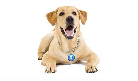 Брелки, медальоны, аксессуары для собак