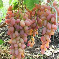 Виноград Денал (черенки)