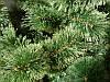 Искусственная елка 0,9 метра (сосна, настольная) распушенная, фото 3