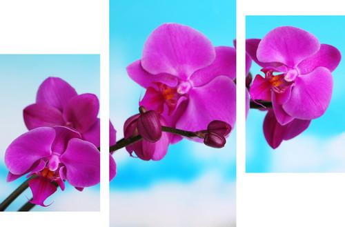 Картина модульная орхидея МD 047