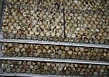 Инкубационные яйца породы Техаский Альбинос, фото 4