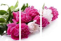Картина модульная цветы МD 053