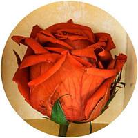 Вечные розы Кофейный топаз, фото 1