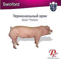 Терминальный хряк Swinford