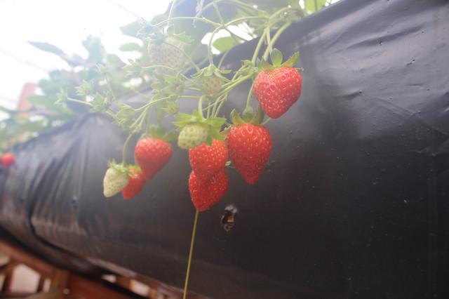 урожай у теплицях