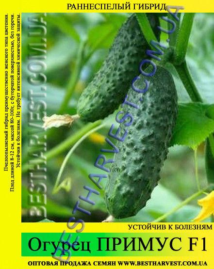 Семена огурца Примус F1 5 кг (мешок)