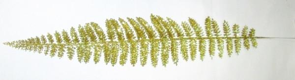 Лист папоротника 53 см золотой