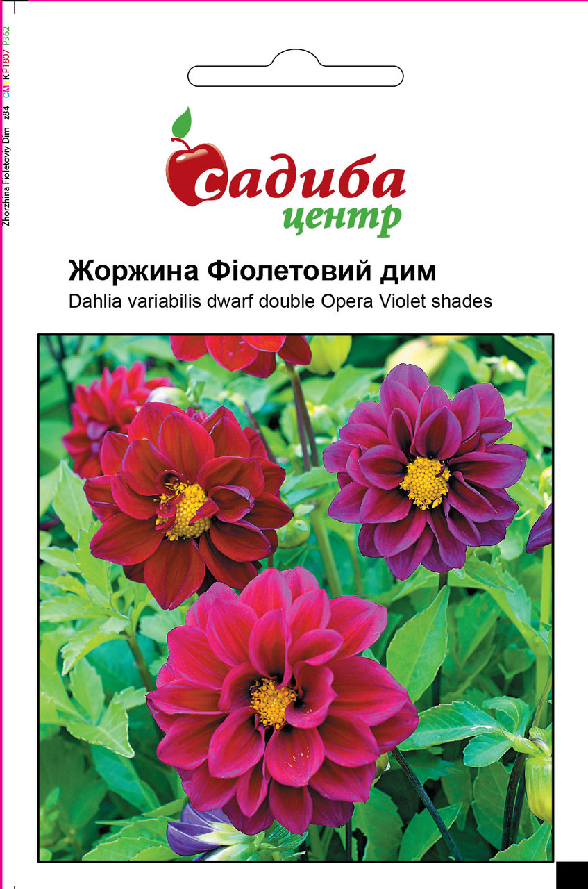 Семена Георгина фиолетовый дым, 0,1 г СЦ