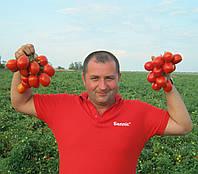 РЕДИ F1 - томат детерминантный, Esasem 1 000 семян
