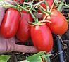 ТАЛЕНТ F1 - томат детерминантный, Esasem 1 000 семян