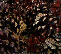 Шишка натуральная 1000 г., фото 1