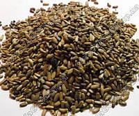 Расторопша (семена)
