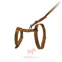 Шлейка для кошки и миниатюрных собак с поводком кожаная (ш 12 мм, А:22-30 см,В:30-40 см, д 122 см) Collar (коричневая)