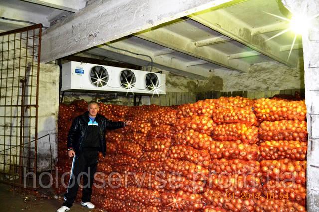 Технология хранения лука в овощехранилище.