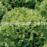 Семена салат Златава