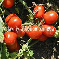 Семена томат Шейк (для консервации)