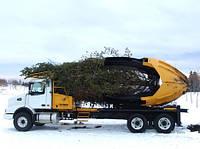 Пересадка деревьев крупномеров