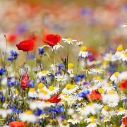 каталог семян цветов