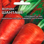 морковь шантане в семенах