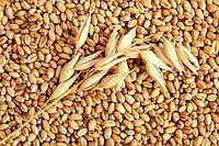 Украина экспортировала более 16,4 млн тонн зерна.