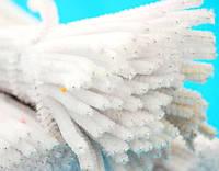 Проволока синельная (пушистая), длина 30 см, диаметр 7 мм. Белая