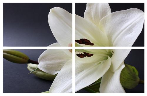 Картина модульная Цветы МD 038