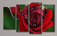Картина модульная на холсте Красная роза