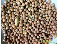 Нут первый сорт, Турецкий горох, один из самых популярных и вкусных бобовых, Chana Dal, Аюрведа Здесь