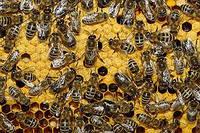 Мед и сопутствующие товары заказ на отводки апрель-май 2014г