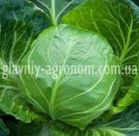 Семена капуста Циклоп Ф1 (1000 семян)