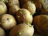 Картофелесажалка для мотоблока – Ваш незаменимый помощник на даче