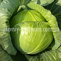 Семена капуста Конкистадор Ф1 (1000 семян)
