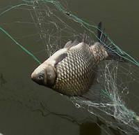 Рыболовная сеть трехстенная Китайка, ячейки 10 -100 мм, длинна 50 метров