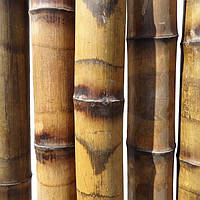 Бамбуковый ствол с термической обработкой и обжигом