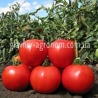 Семена томат CXD 187 F1 (1000 семян)