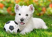 Пазлы Белый щенок с мячом, 60 элементов, Castorland В-06823
