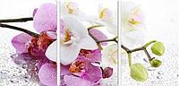 Набор алмазной вышивки Орхидея. Триптих (три картины). 75 х 35 см (арт. FS312) , фото 1