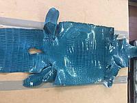 Кожа крокодила лаковая синяя
