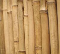 Бамбуковые колья от 295 см