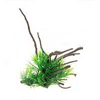 Aquael растение на корне пластик В2207 24х12х16см