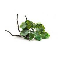 Aquael растение на корне пластик В2001 23х16х14 см