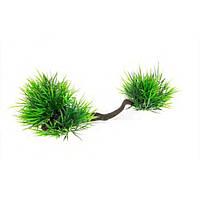 Aquael растение на корне пластик В2008 23х10х9см