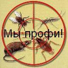 Уничтожение тараканов, клопов, блох, клещей, комаров, ос-Дезинсекция